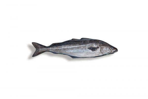 lieu_noir_filet-fait-main-sirènes-boulogne-petits_bateaux-pêche-poisson_frais
