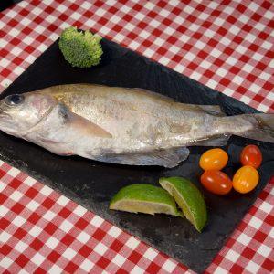 tacaud-poisson-frais -boulogne-sur-mer -filet- main