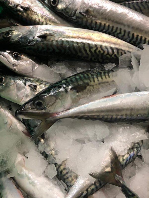 maquereau-sirenes_boulonnaises-drive-boutisue_en_ligne-poissons frais