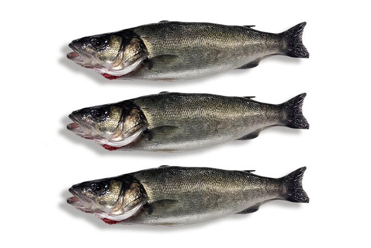 les_sirènes_boulonnaises-categorie-poissons_frais2