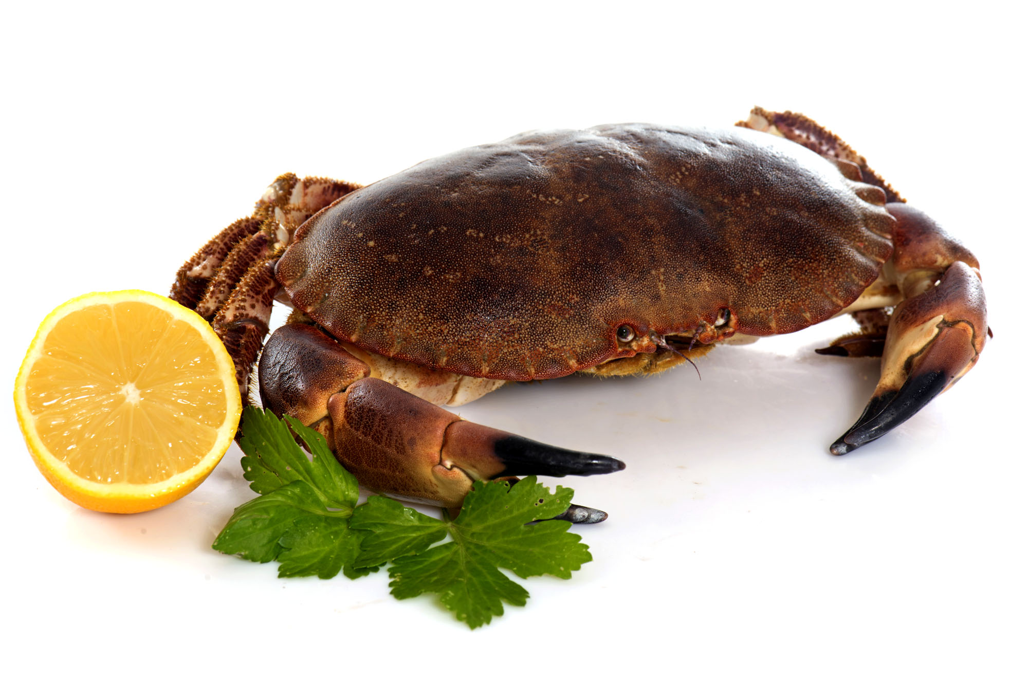 Chair de crabe suite