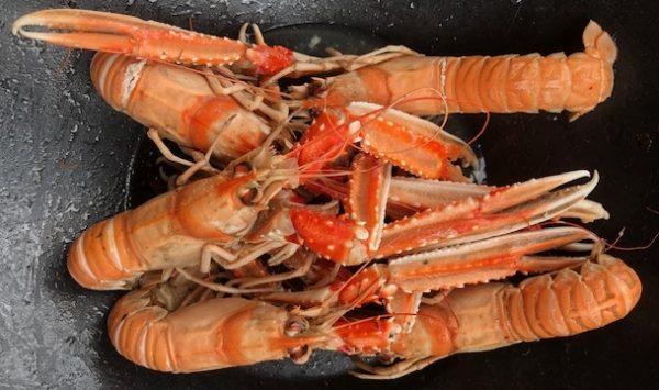 langoustine-sirenes-poisson-frais-petit_bateau-boulogne_sur_mer